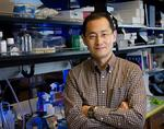 <strong>Shinya</strong> <strong>Yamanaka</strong> of Gladstone, UCSF wins Nobel Prize