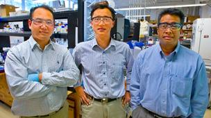 From left, Byung Yang Lee, Seung-Wuk Lee, and Ramamoorthy Ramesh developed the