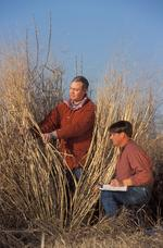 Plant lab scientists keep switchgrass 'forever young' to make fuel