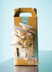 A box of oyster mushrooms, which retails for $19.95.