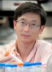 Sheng Ding is a senior investigator at The J. David Gladstone Institutes.