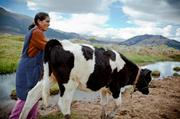 Albertina Calanchi is a 35-year-old dairy farmer from an indigenous community in the Peruvian Andes. Seattle-based microfinance Global Partnerships helped Calanchi receive loans and education that grow her dairy business from one to 12 cows.