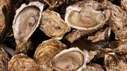 Neptune. Island Creek? Take your pick. Top Chef needs a Boston oyster shucking challenge.