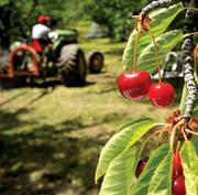 Farmers relied on Columbia River Bank for loans to grow cherries.