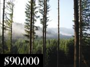 The amount Darren Berg donated to The Fred M. van Eck Forest Foundation in Oregon is now being reclaimed by a bankruptcy trustee looking to compensate Berg's Ponzi scheme victims. The trustee has filed a lawsuit to force the conservation fund to return the money.