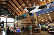 IN THE HUNT: Hanging replicas of orca chasing salmon loom above customers at Cabela's new, 110,000-square-foot store at Quil Ceda Village, the Tulalip Tribes' diversified enterprise near Marysville.