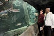BAITING SPORTSMEN: John Fullmer (left) and David Hayes look at trout and other game fish in one of two 8,000-gallon aquariums inside Cabela's .