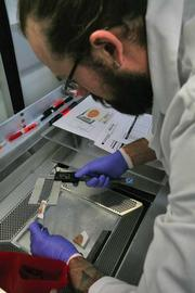 Patrick Parker, a data analyst at the Allen Institute for Brain Sciences, measures the thickness of a frozen slab of cerebellum from a human brain.