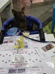 Goliath, a long-hair chihuahua, enjoys a Bark-A-Rita from Doggie Bag Cafe in Miami.