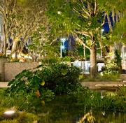 Landscape Architecture award winner Raymond Jungles for 1111 Lincoln Road in Miami Beach.