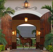 A horse welcomes visitors to the equestrian estate.