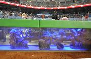 One of two fish tanks behind home plate