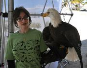 Victoria Cano of the Museum of Science with a Bald Eagle.