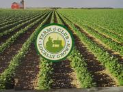 The Farm to Club program allows customers to buy fresh vegetables that are grown close to home, helping to support local farmers.