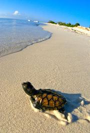 CAFTA included an agreement to end sales of hawksbill sea turtles and products made from them.