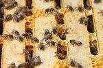 Monsanto launches honey bee advisory council