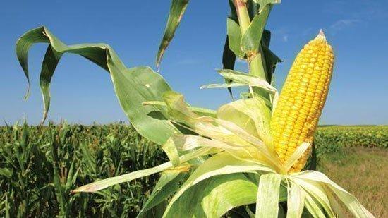 Loans in the Cornbelt region rose 15.6 percent in 2012.