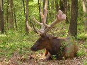 Lone Elk Park, which includes 546 acres of land, features bison, wild turkey, waterfowl, elk and deer.