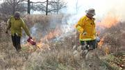 """The fires in Forest Park were spotty, or """"creeping,"""" due to a lack of strong winds."""
