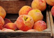 6. Peaches grew in production from 8.4 million pounds to 11 million pounds this year. Peaches decreased in average value from $1,500 per ton in 2009 to $1,300 in 2010.