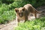 Saint Louis Zoo's year-to-date attendance tops 1 million: SLIDESHOW