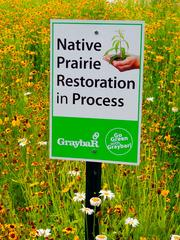 Native prairie Graybar cultivated about one acre of native prairie on its Centerpoint facility grounds in Maryland Heights.