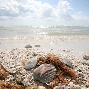 Tampa Bay beaches TripAdvisor