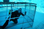 Linda Griffin, dive lead volunteer, cleans the walls and bottom of the outside dolphin tank.