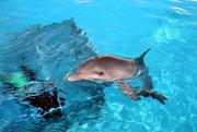 Hope is an 11-month-old bottlenose dolphin who was orphaned and rescued as a baby.