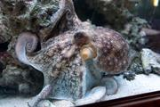 PoPo the octopus is a favorite of the staff.