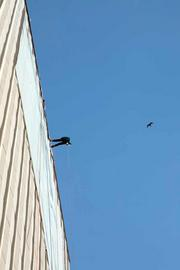 Damaris Negrillo, credit analyst with The Wilson Co., rappelling with birds around her.