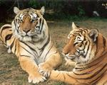 Risky business in exotic animals