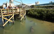 Viewers look from the boardwalk.
