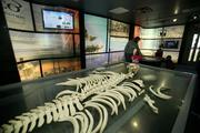 The Education Center at the boardwalk includes a full Florida manatee skeleton.