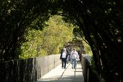 Visitors take the boardwalk out toward the Bay for even closer views of the manatees, native flora and fauna.