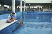Clearwater Marine Aquarium's Kelly Martin, manager of marine mammals, trains Panama, who is deaf, as a visitor gets a closeup view.
