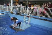 Clearwater Marine Aquarium's trainer Sunny Gurule works with Winter during the dolphin presentation and gets some help from visitor Catherine Van Demark from Ohio.