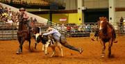 Shane Kuhn from Anthony, Fla., wrestles the steer to the ground.