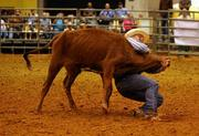 Bud Hallman, circuit court judge from Webster, Fla., wrestles a steer to the ground.