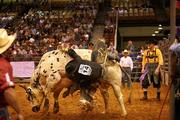 Josh Barentine from Dequincy, La., during the bull riding competition. He came in first with 84 points.
