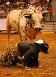 Josh Barentine from Dequincy, La., during the bull riding competition.