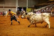 After a cowboy is thrown off during the bull riding competition, the rodeo clowns draw the bull away from him.