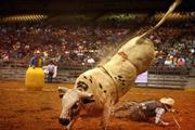 A bull named PO throws Jimmy Lathero off during the bull riding competition.