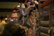 After a cowboy is thrown off during the bull riding competition, the bull charges, forcing the rider to throw himself over the bars to safety.