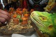 The Green Iguana airport location served lava martini shots of shrimp.