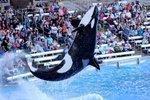 Judge reduces fine against SeaWorld