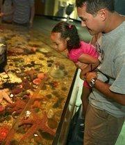 Visitors, Donald Huesing from Orlando and his daughter, Sophia, 3, look at sea life in the touch tank at The Florida Aquarium.