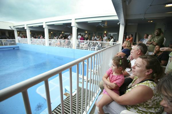 Aquarium visitors wait for the rain to stop and the dolphin presentation featuring Winter, inset, and Panama to begin.