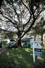 Agent, builder propose saving grand tree in Beach Park