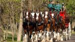 Budweiser Clydesdales to see Winston-Salem
